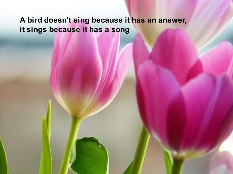 A bird doesn t sing because it has an answer, it sings because it has a song