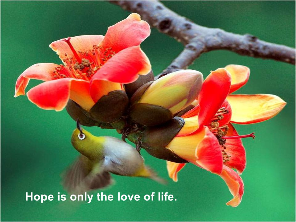 Hope is only the love of life.