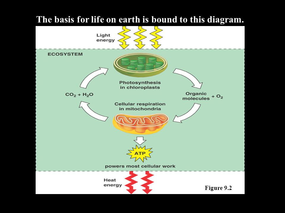 The basis for life on earth is bound to this diagram. Figure 9.2