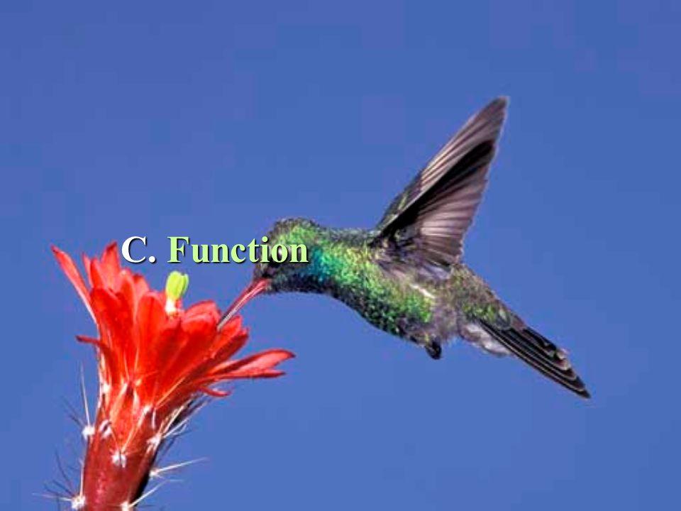 C. Function