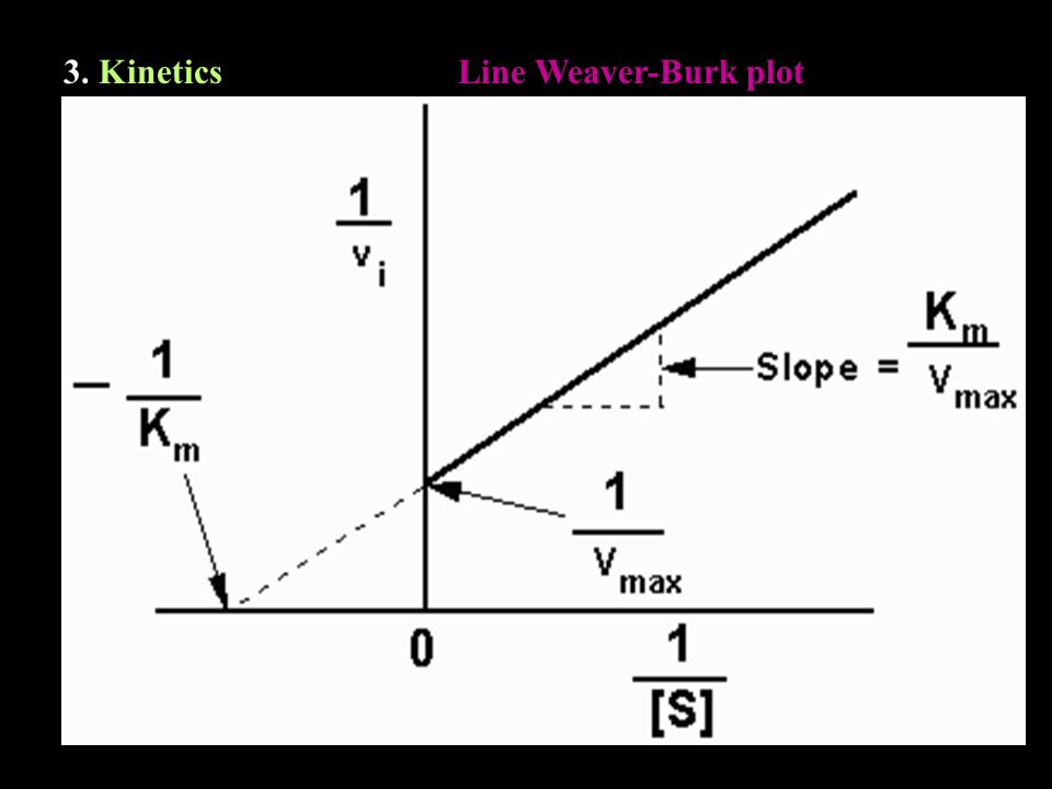 3. KineticsLine Weaver-Burk plot