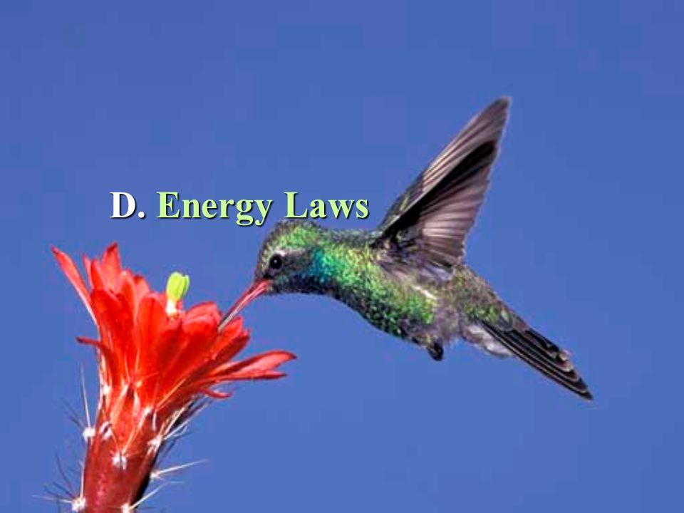 D. Energy Laws