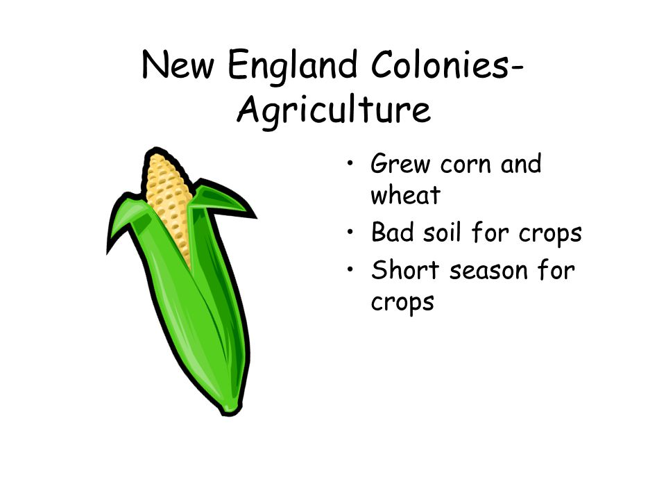 New England Colonies-Economy Made furniture, especially chairs Made ships Fished Grew corn and wheat