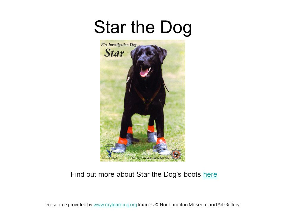 Star the Dog Find out more about Star the Dog's boots herehere Resource provided by www.mylearning.org Images © Northampton Museum and Art Gallerywww.mylearning.org