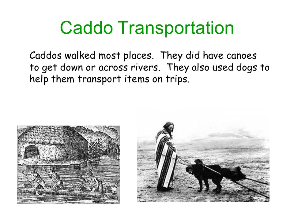 Caddo Transportation Caddos walked most places.They did have canoes to get down or across rivers.