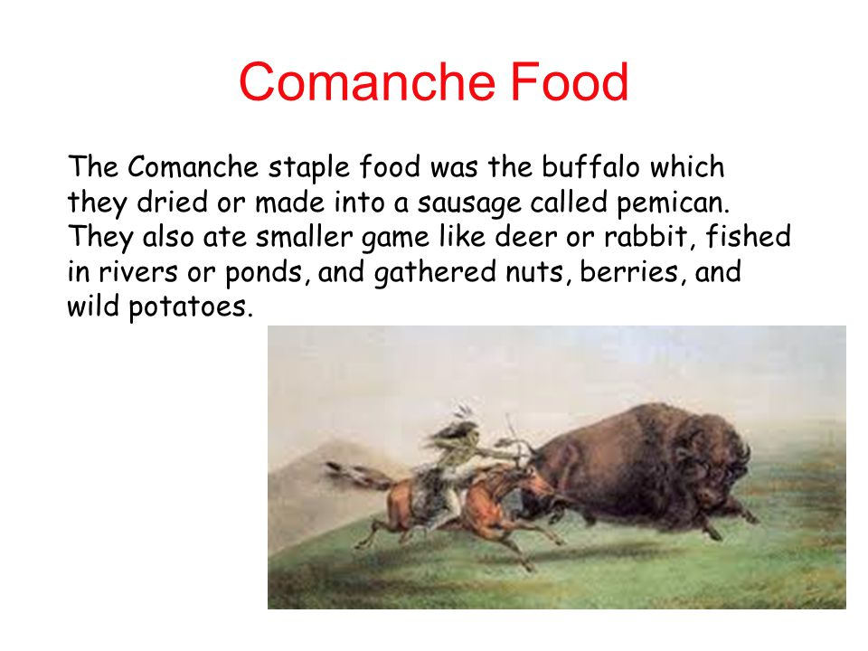 Comanche Food The Comanche staple food was the buffalo which they dried or made into a sausage called pemican.