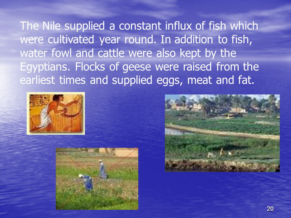 20 The Nile supplied a constant influx of fish which were cultivated year round.