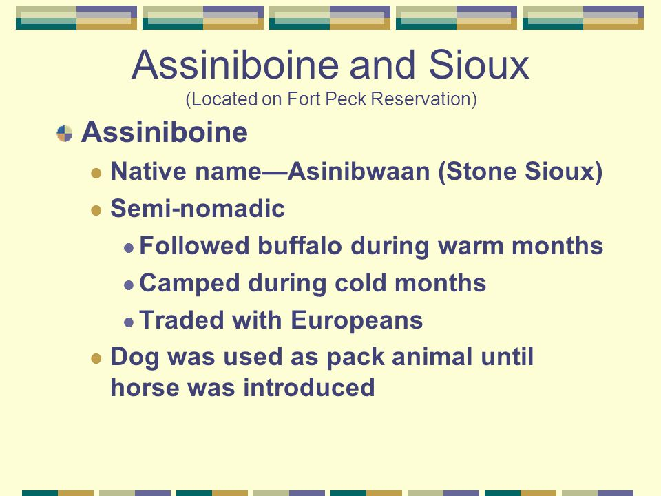 Assiniboine and Sioux (Located on Fort Peck Reservation) Assiniboine Native name—Asinibwaan (Stone Sioux) Semi-nomadic Followed buffalo during warm months Camped during cold months Traded with Europeans Dog was used as pack animal until horse was introduced