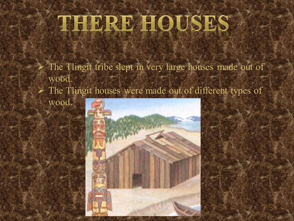  The Tlingit tribe slept in very large houses made out of wood.