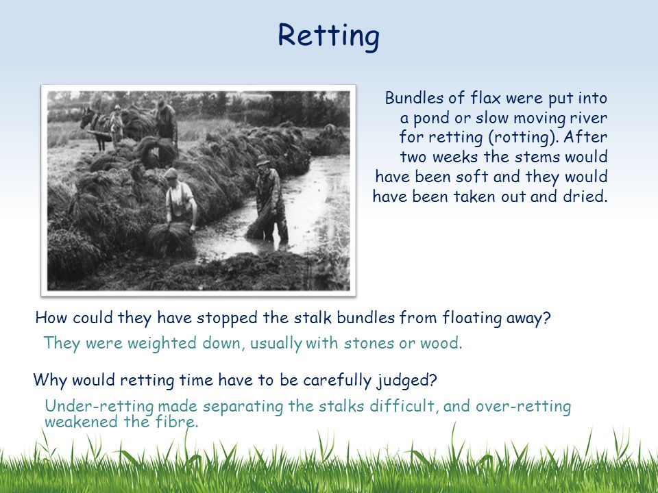 Bundles of flax were put into a pond or slow moving river for retting (rotting).
