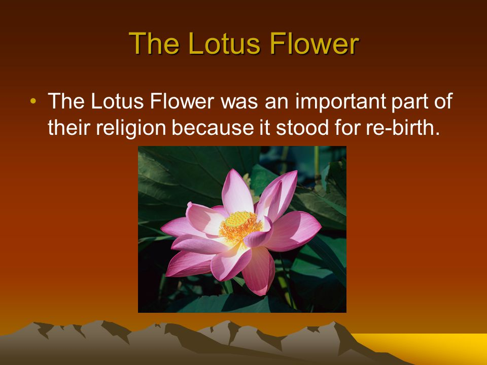 The Lotus Flower The Lotus Flower was an important part of their religion because it stood for re-birth.