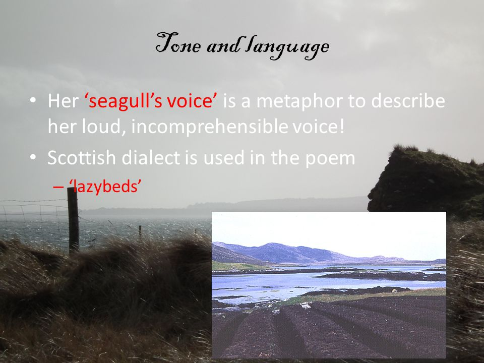 Tone and language Her 'seagull's voice' is a metaphor to describe her loud, incomprehensible voice! Scottish dialect is used in the poem – 'lazybeds'