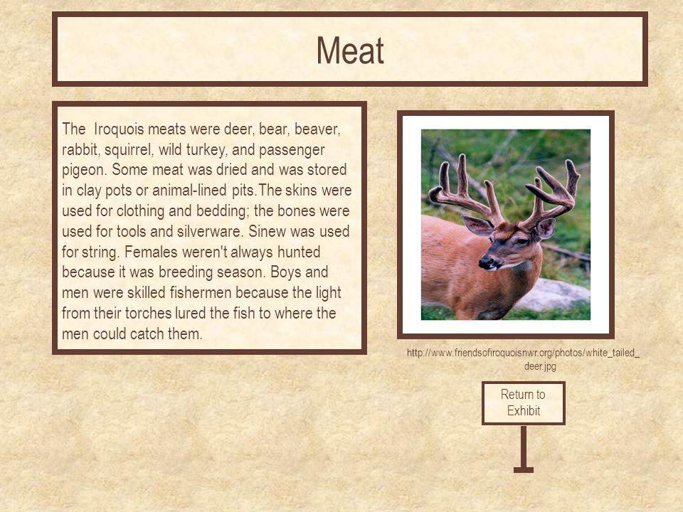 http://www.friendsofiroquoisnwr.org/photos/white_tailed_ deer.jpg The Iroquois meats were deer, bear, beaver, rabbit, squirrel, wild turkey, and passenger pigeon.