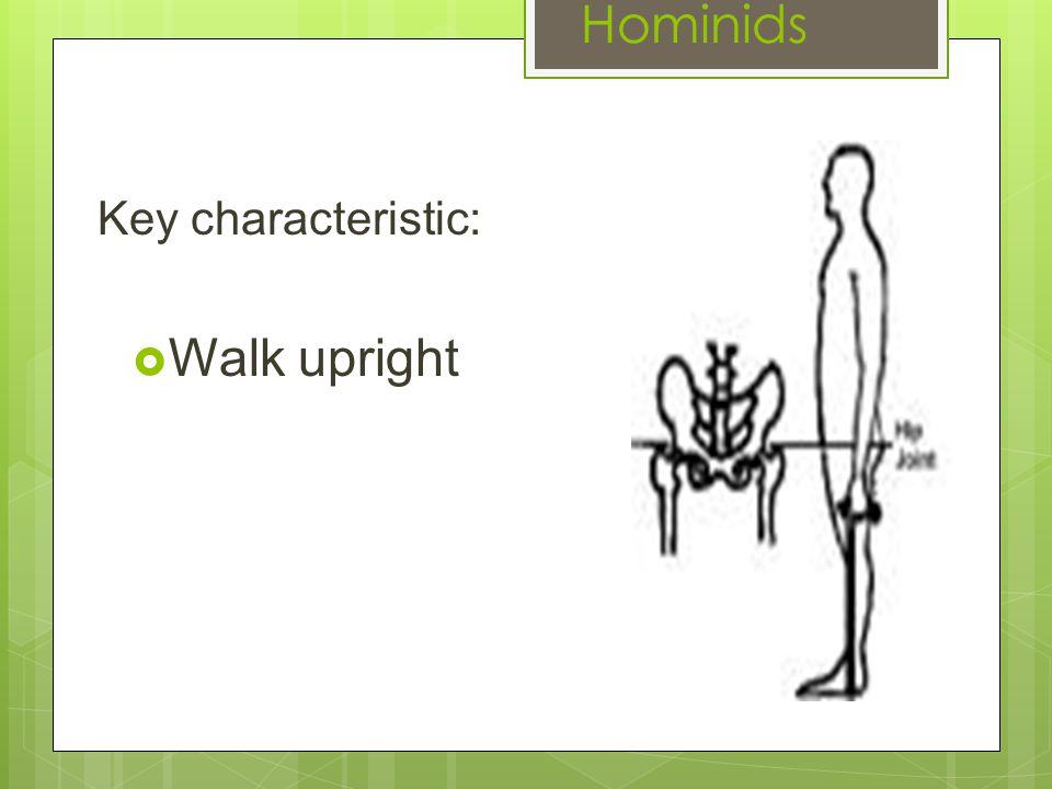 Hominids Key characteristic:  Walk upright