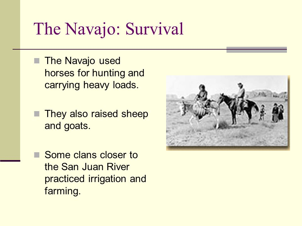 The Navajo: Survival The Navajo used horses for hunting and carrying heavy loads. They also raised sheep and goats. Some clans closer to the San Juan