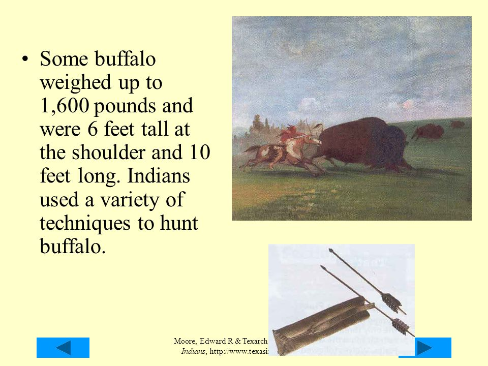 Moore, Edward R & Texarch Assoc., Texas Indians, http://www.texasindians.com/ Some buffalo weighed up to 1,600 pounds and were 6 feet tall at the shou