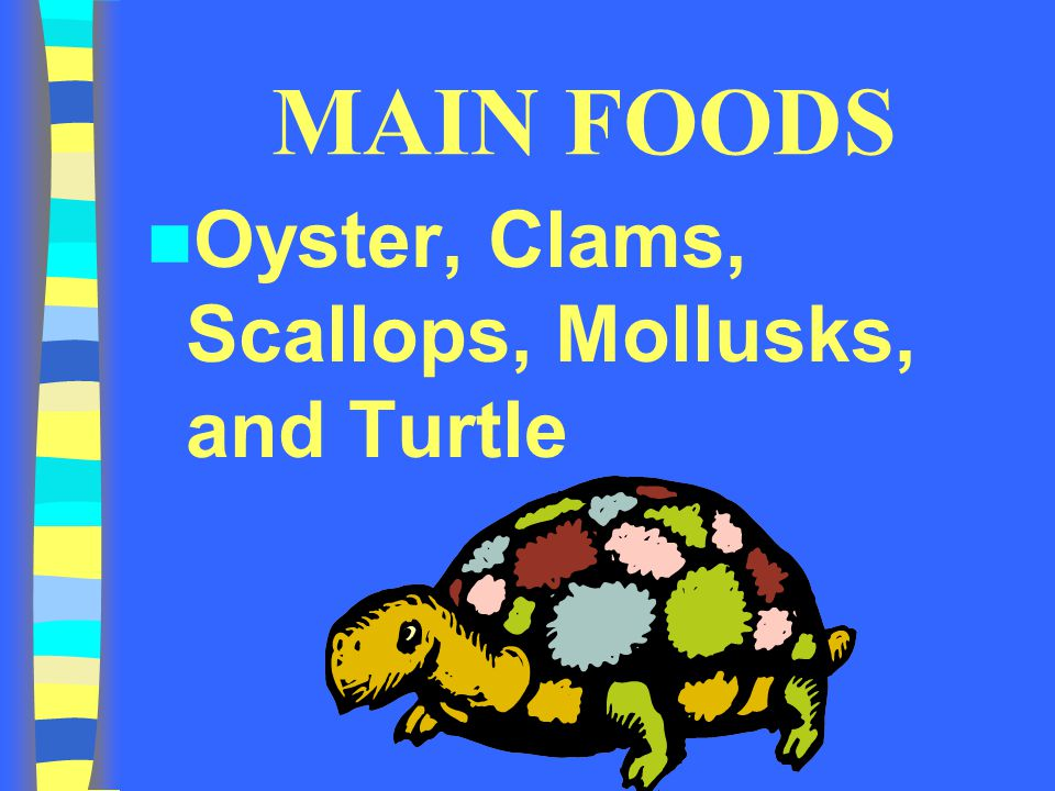 MAIN FOODS Oyster, Clams, Scallops, Mollusks, and Turtle
