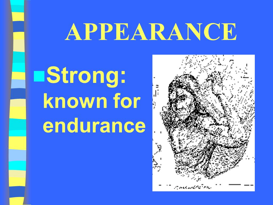 APPEARANCE Strong: known for endurance