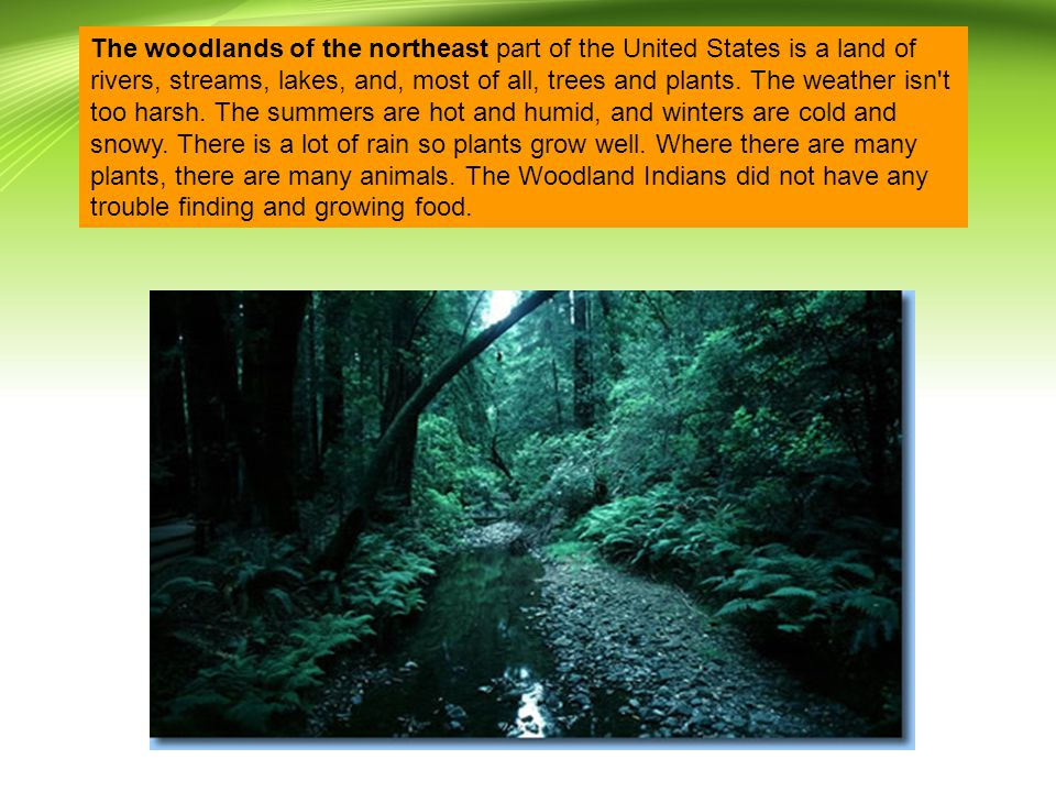 The woodlands of the northeast part of the United States is a land of rivers, streams, lakes, and, most of all, trees and plants.