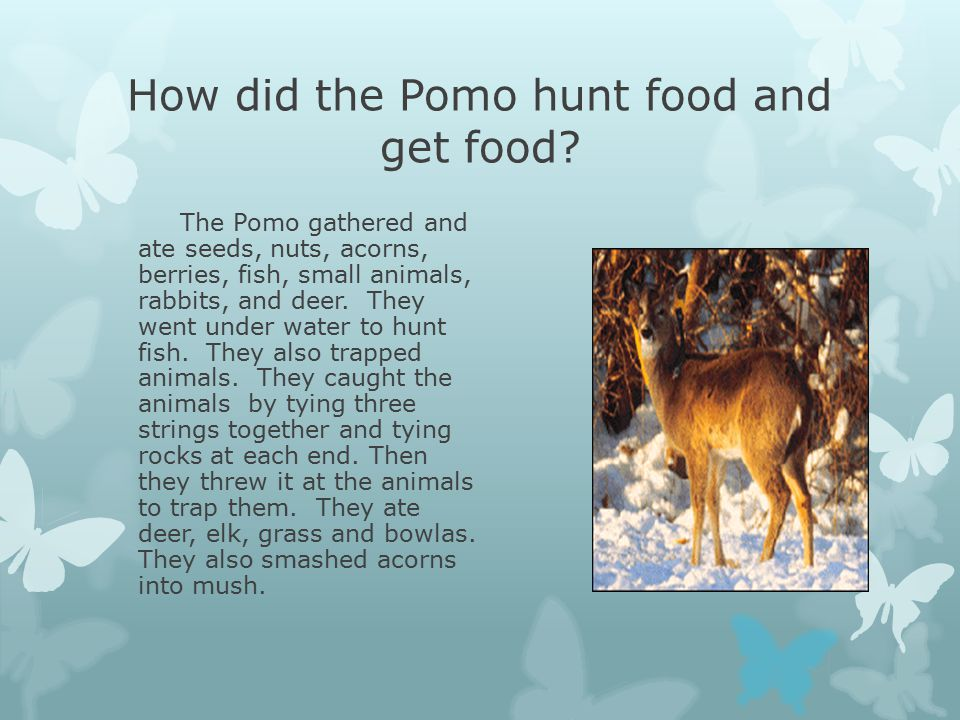 How did the Pomo hunt food and get food.
