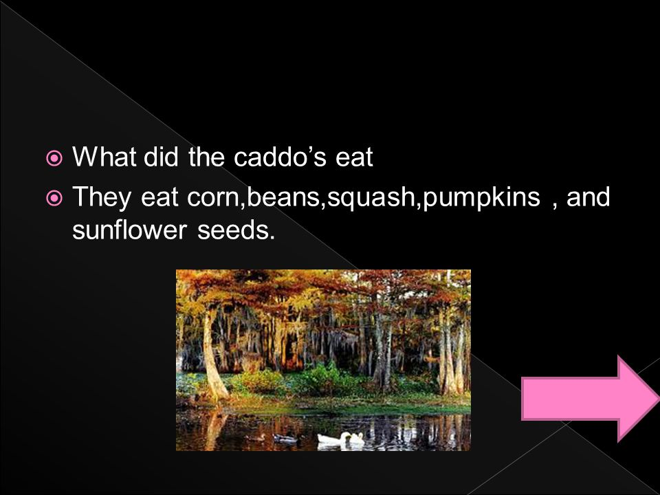  What did the caddo's eat  They eat corn,beans,squash,pumpkins, and sunflower seeds.