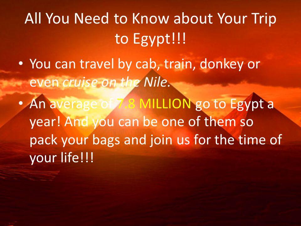 Tour!. Go on cruises up the Nile!. Travel by donkey!!.