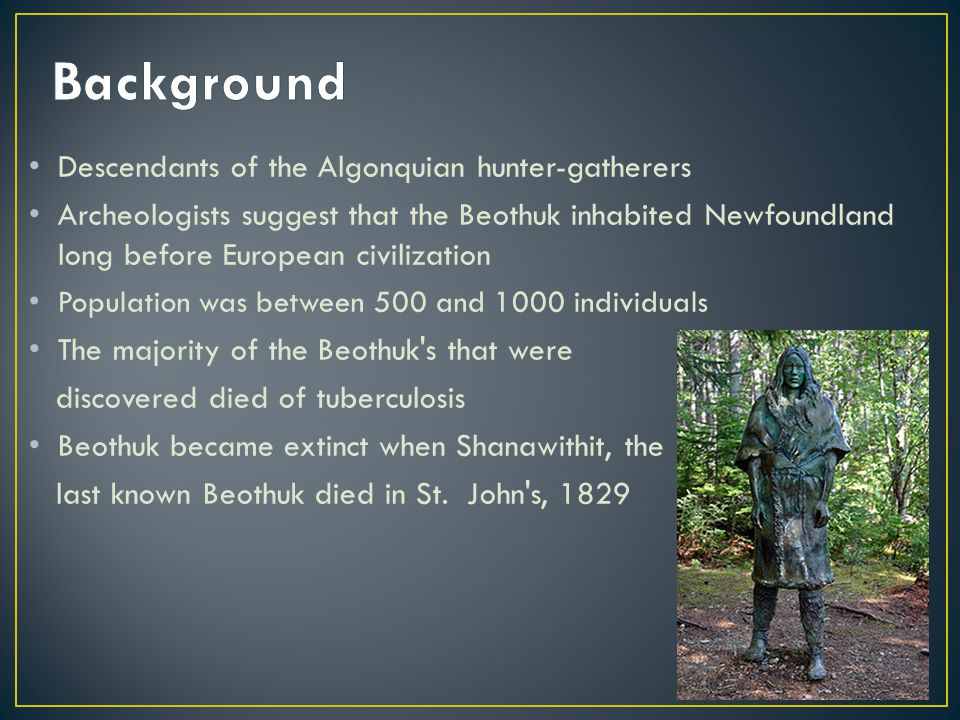 Descendants of the Algonquian hunter-gatherers Archeologists suggest that the Beothuk inhabited Newfoundland long before European civilization Population was between 500 and 1000 individuals The majority of the Beothuk s that were discovered died of tuberculosis Beothuk became extinct when Shanawithit, the last known Beothuk died in St.
