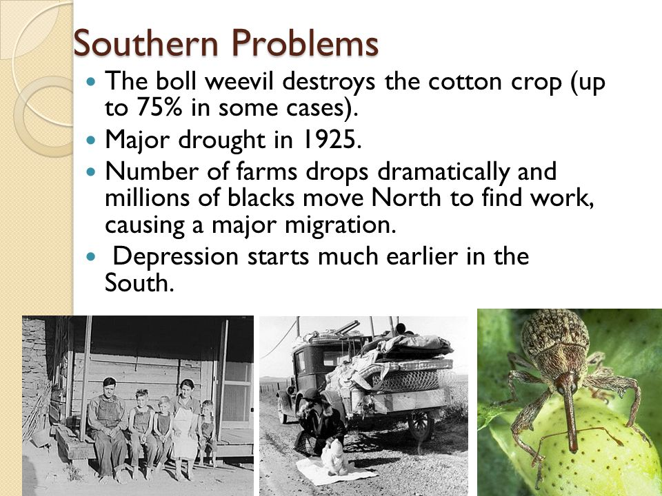 Southern Problems The boll weevil destroys the cotton crop (up to 75% in some cases).