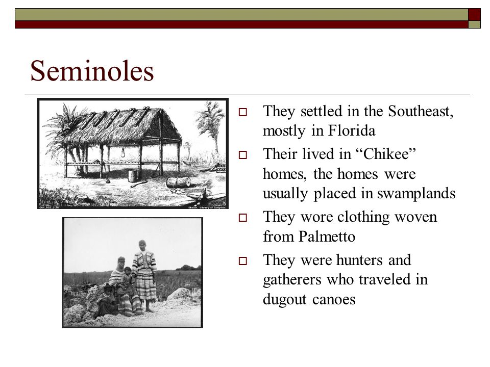 """Seminoles  They settled in the Southeast, mostly in Florida  Their lived in """"Chikee"""" homes, the homes were usually placed in swamplands  They wore"""