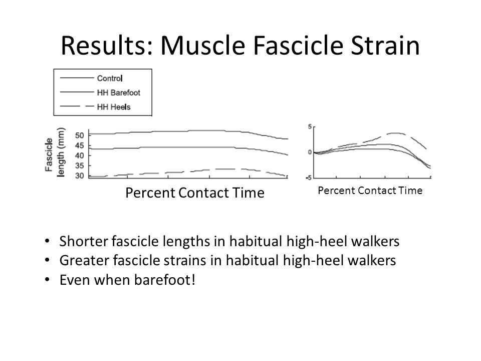 Results: Muscle Fascicle Strain Percent Contact Time Shorter fascicle lengths in habitual high-heel walkers Greater fascicle strains in habitual high-heel walkers Even when barefoot!