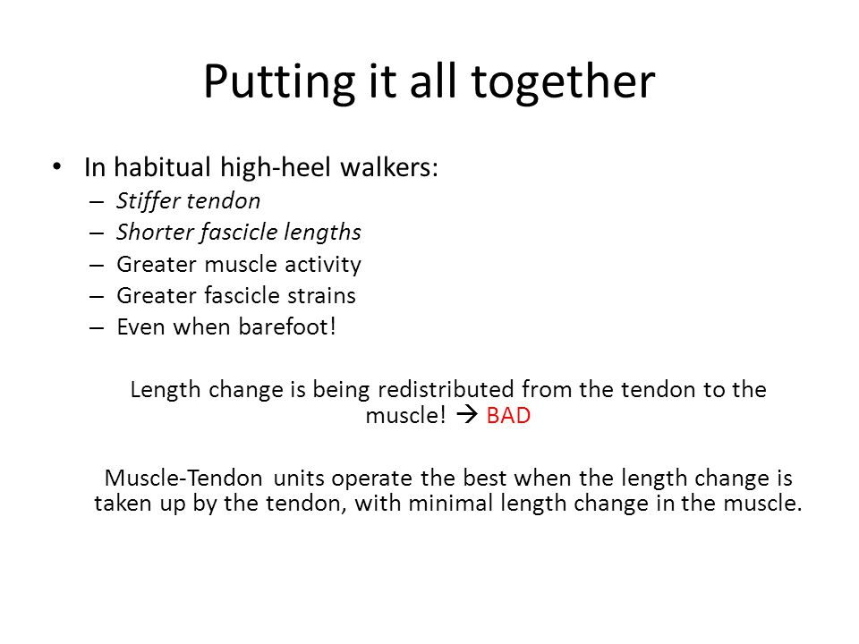 Putting it all together In habitual high-heel walkers: – Stiffer tendon – Shorter fascicle lengths – Greater muscle activity – Greater fascicle strains – Even when barefoot.