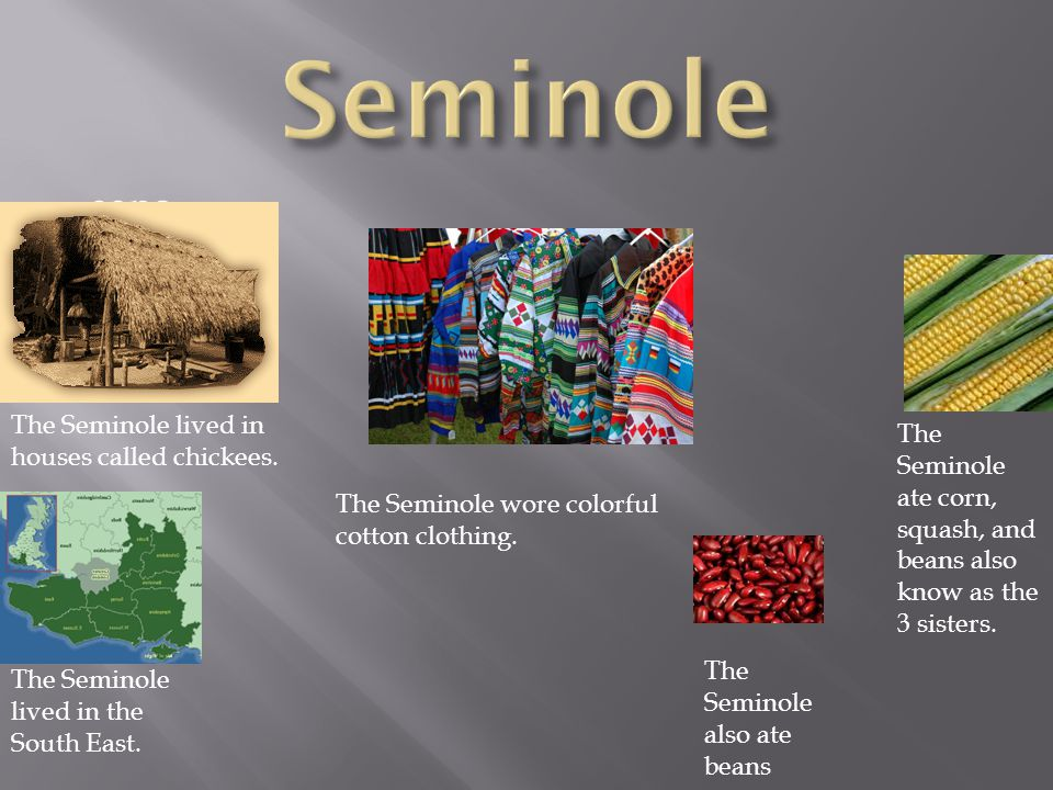 eans The Seminole ate corn, squash, and beans also know as the 3 sisters.