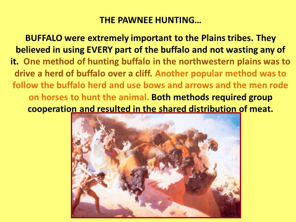 THE PAWNEE HUNTING… BUFFALO were extremely important to the Plains tribes.