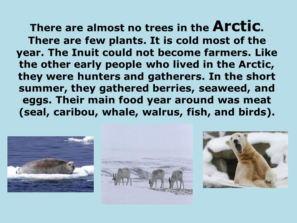 There are almost no trees in the Arctic.There are few plants.