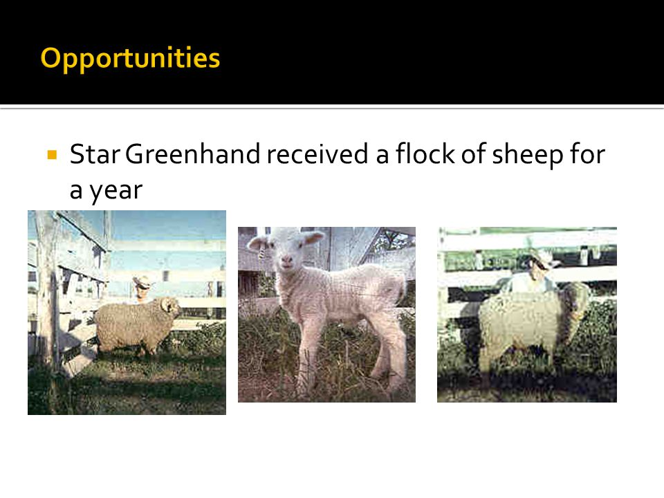  Enrolled in a CTE course – Agricultural Education and joined the FFA  The Greenhand pin