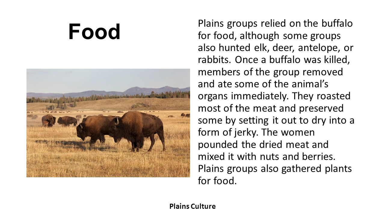 Food Plains groups relied on the buffalo for food, although some groups also hunted elk, deer, antelope, or rabbits. Once a buffalo was killed, member