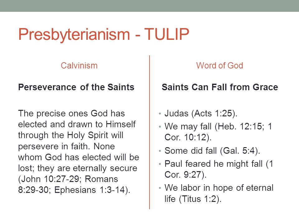 Presbyterianism - TULIP Calvinism Perseverance of the Saints The precise ones God has elected and drawn to Himself through the Holy Spirit will persev