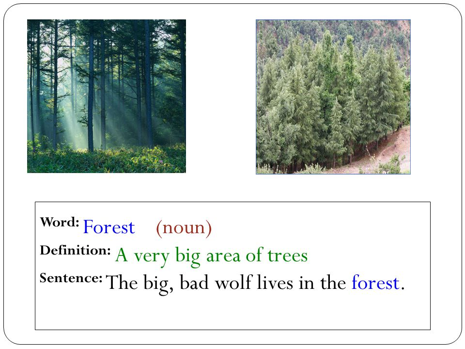 Word: Forest (noun) Definition: A very big area of trees Sentence: The big, bad wolf lives in the forest.