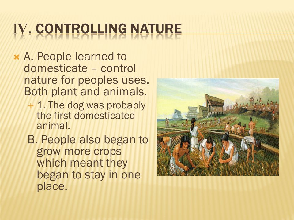  A. People learned to domesticate – control nature for peoples uses.