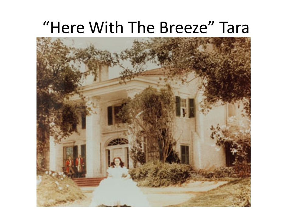 """Here With The Breeze"" Tara"