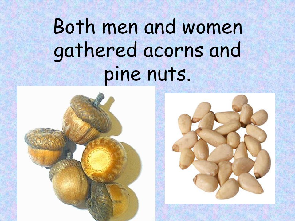 Both men and women gathered acorns and pine nuts.