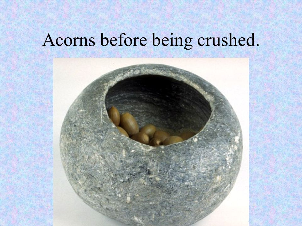 Acorns before being crushed.