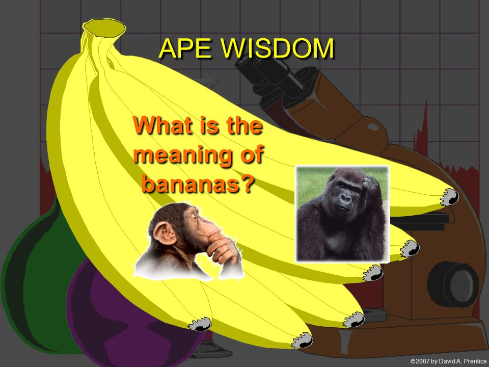 2007 by David A. Prentice APE WISDOM What is the meaning of bananas