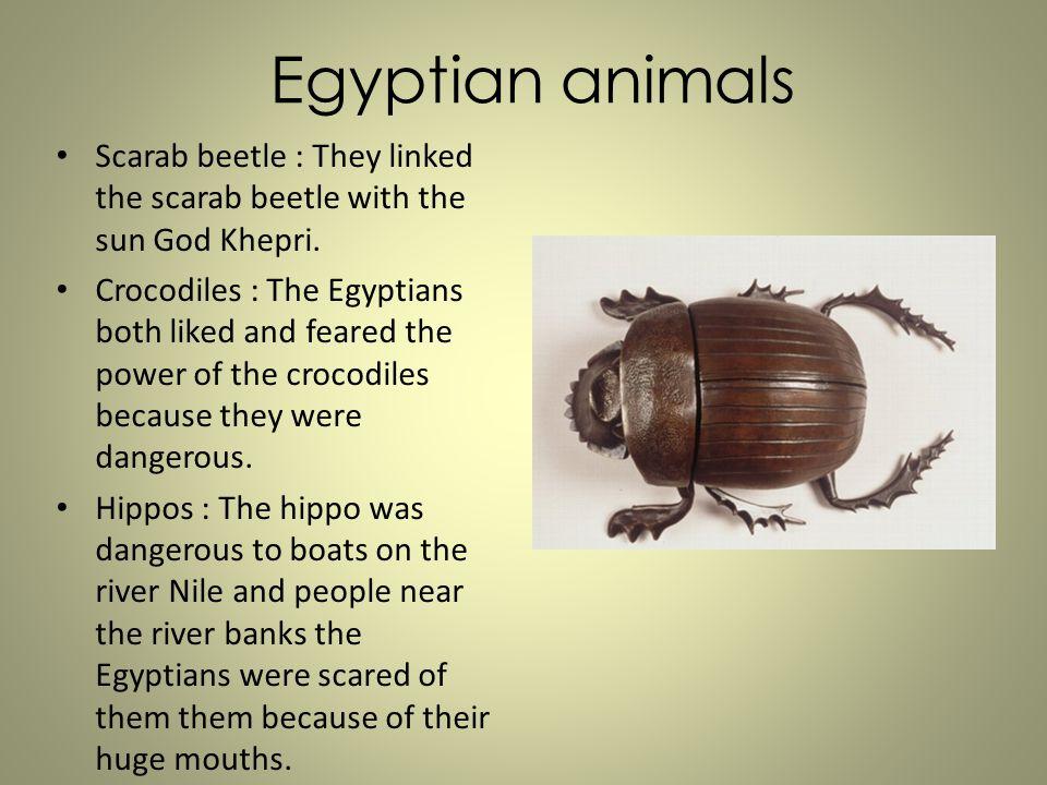 Egyptian animals Scarab beetle : They linked the scarab beetle with the sun God Khepri.
