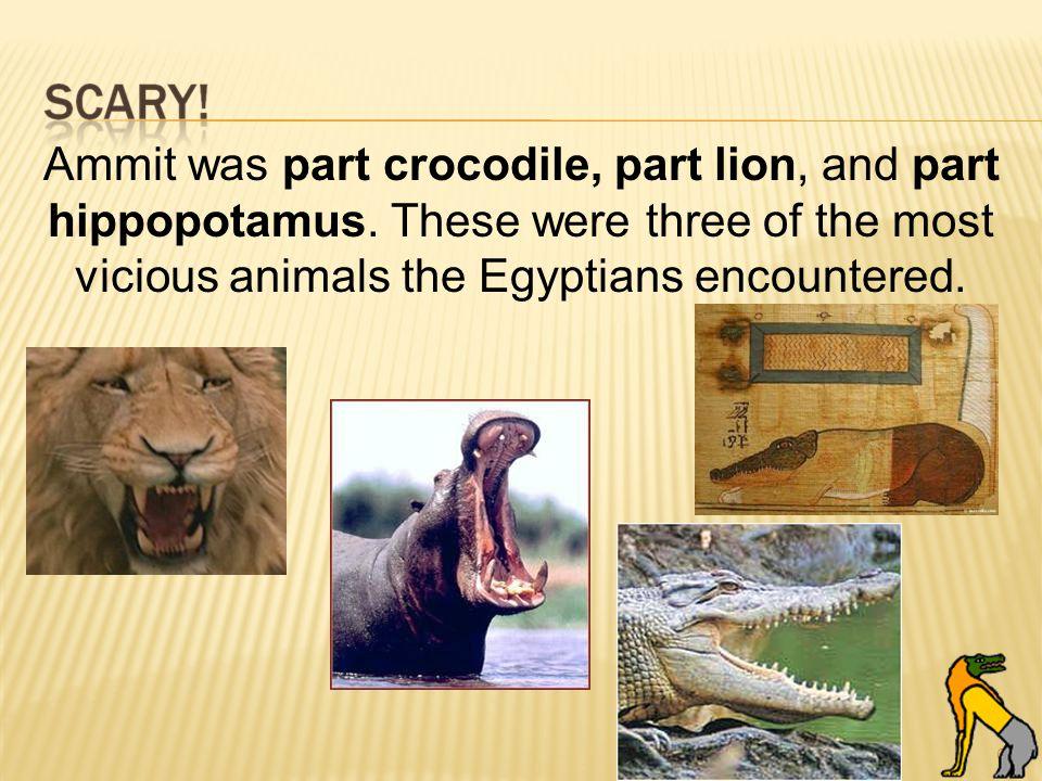 61 Ammit was part crocodile, part lion, and part hippopotamus.