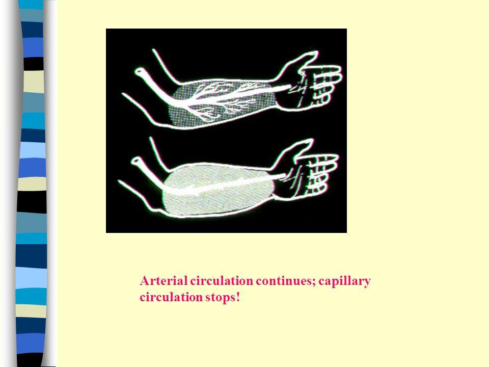 Arterial circulation continues; capillary circulation stops!