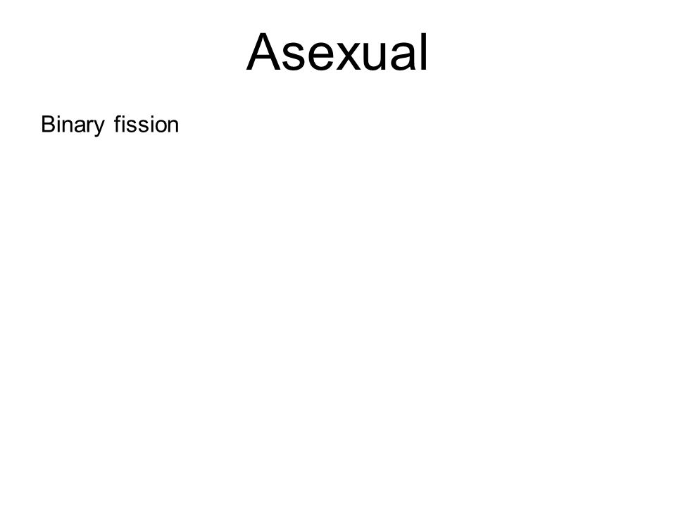 Asexual Binary fission