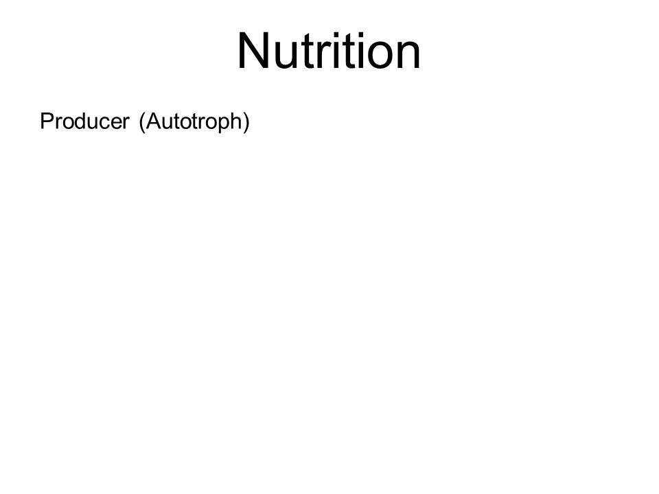 Nutrition Producer (Autotroph)