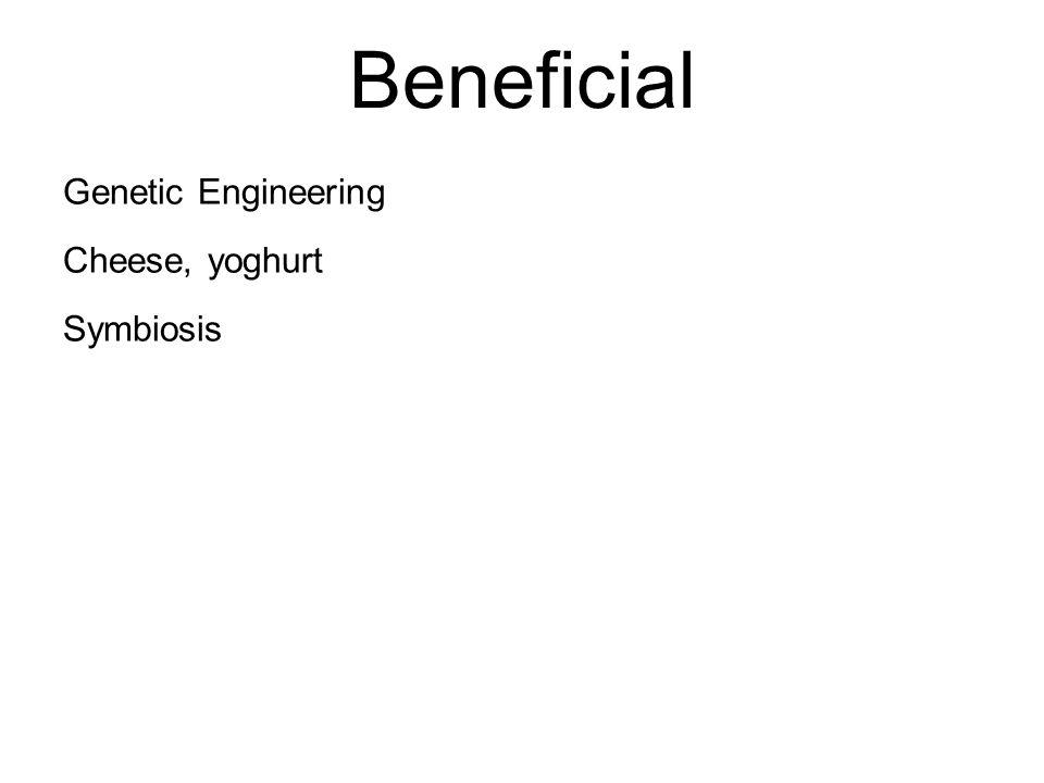 Beneficial Genetic Engineering Cheese, yoghurt Symbiosis