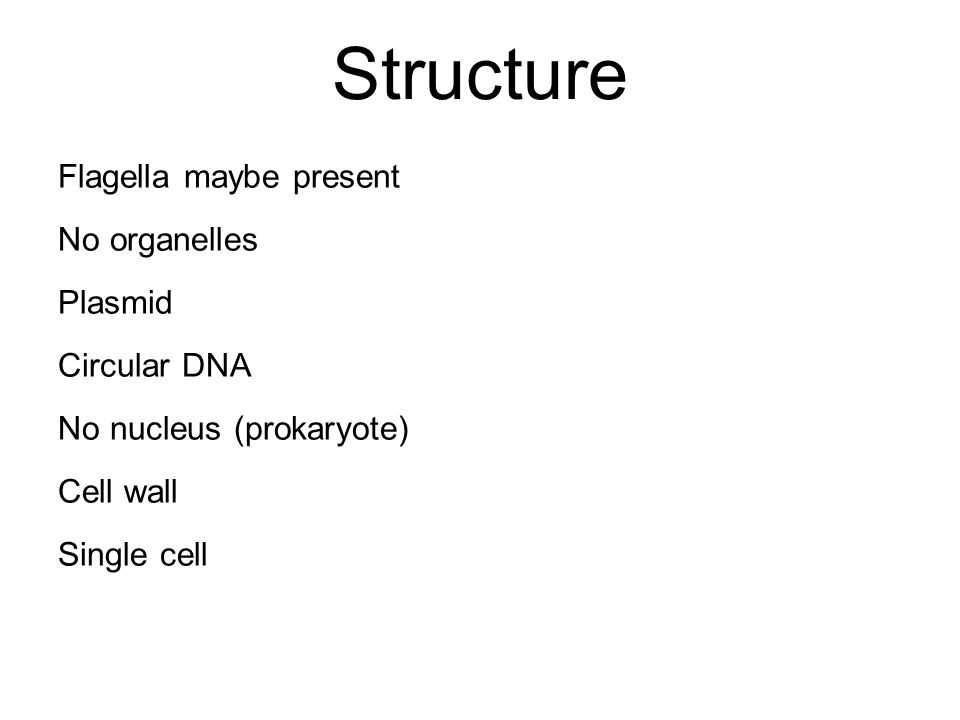 Structure Flagella maybe present No organelles Plasmid Circular DNA No nucleus (prokaryote) Cell wall Single cell